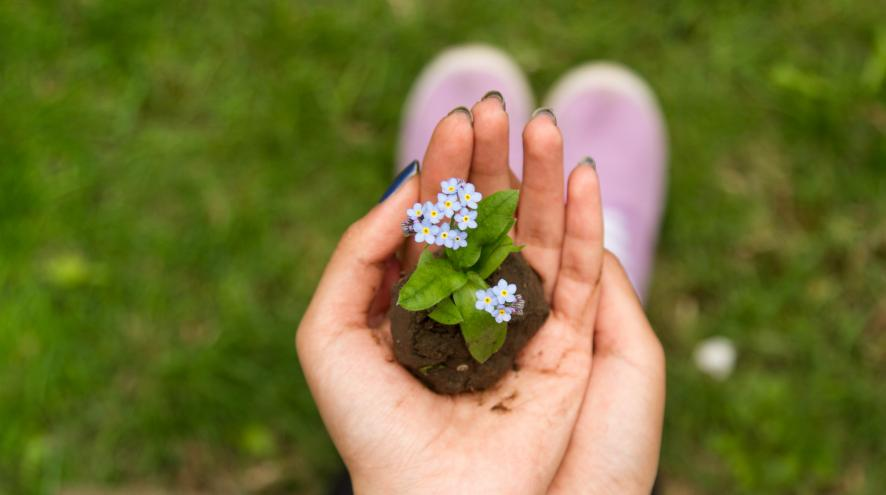 hands craddling a small clump of forget me not flowers